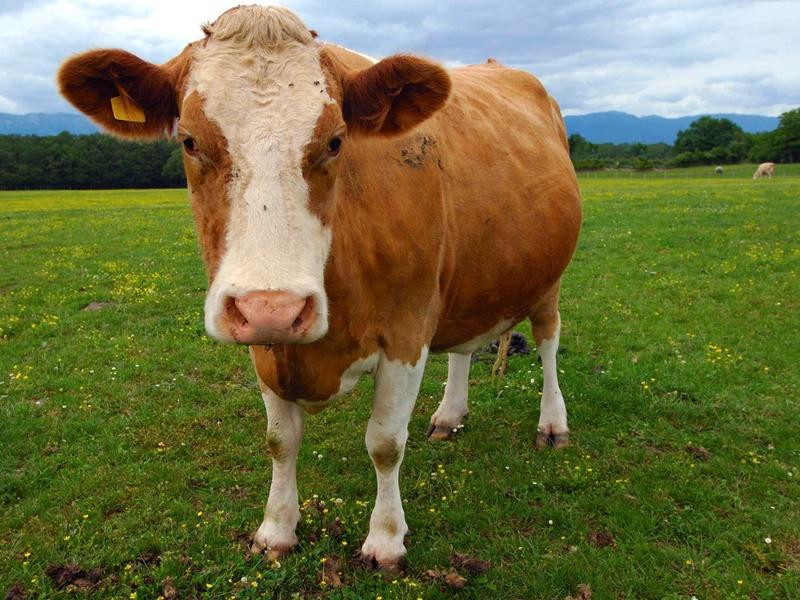 Pesan Kemanusiaan Di Balik Program Aksi Patungan Daging Qurban